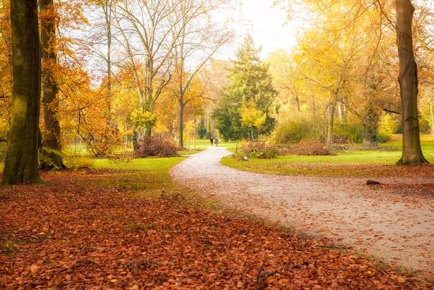 Prachtig uitzicht op het bos in de herfst