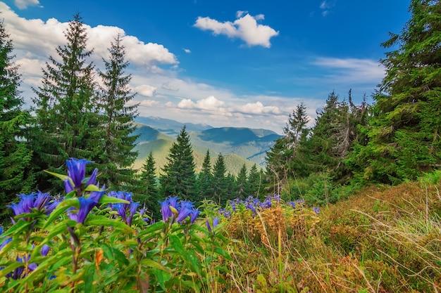 Prachtig uitzicht op landschap met bergen karpaten. blauwe bloemen op de voorgrond.