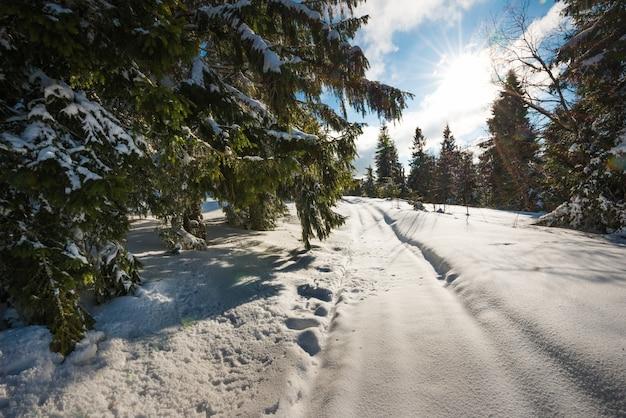 Prachtig uitzicht op majestueuze groene sparren die groeien op een heuvel in de wintersneeuwbanken
