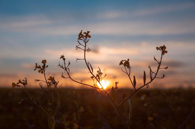 Prachtig uitzicht op ochtendlicht