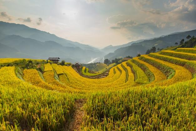 Prachtig uitzicht op rijstterras (doi mong ngua, diem chup lua view point) in mu cang chai, vietnam, landbouwer implant op hoge berg.