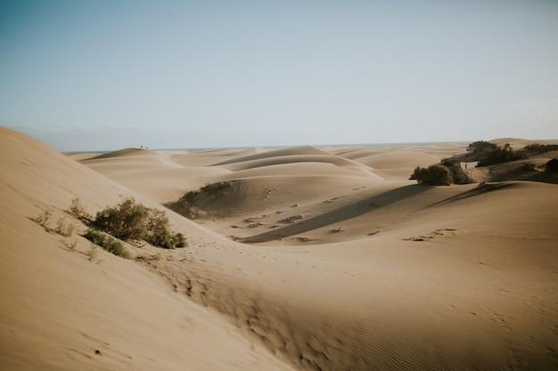 Prachtig uitzicht op woestijnduinen met groene struiken - perfect voor behang