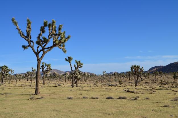 Prachtig uitzicht van joshua tree national park in californië, usa