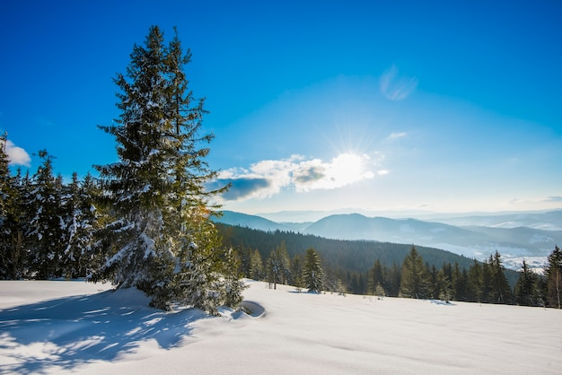 Prachtig uitzicht van majestueuze groene sparren die groeien op een heuvel in de winter sneeuwlaag tegen een blauwe lucht en witte wolken op een zonnige ijzige winterdag