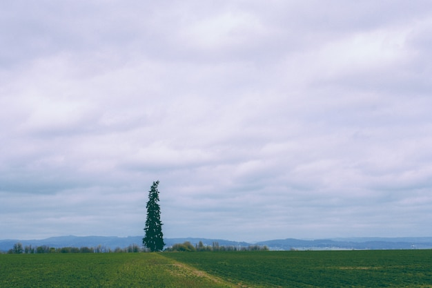 Prachtig veld met een enkele pijnboom en een verbazingwekkende bewolkte hemel
