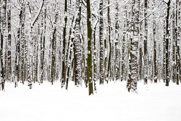Prachtig winterbos en de weg