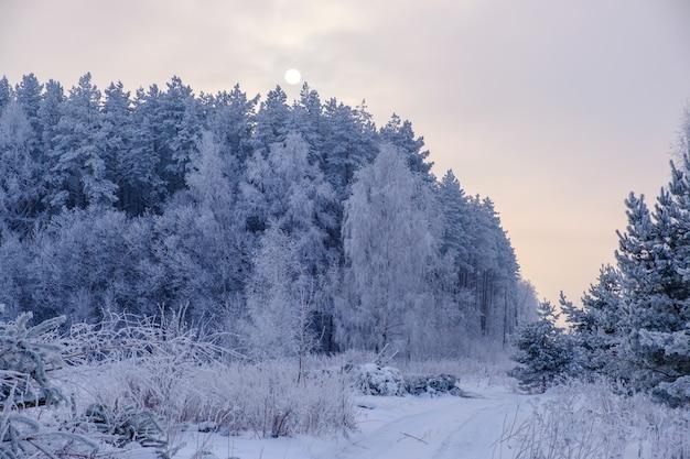 Prachtig winterbos en de zon door de mistige nevel.