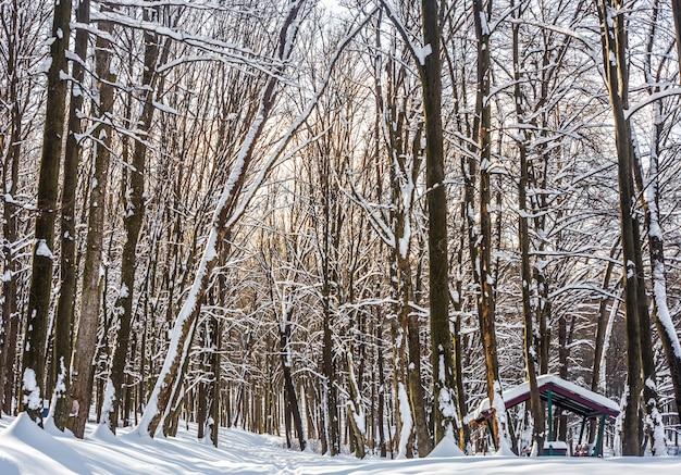 Prachtig winterbos