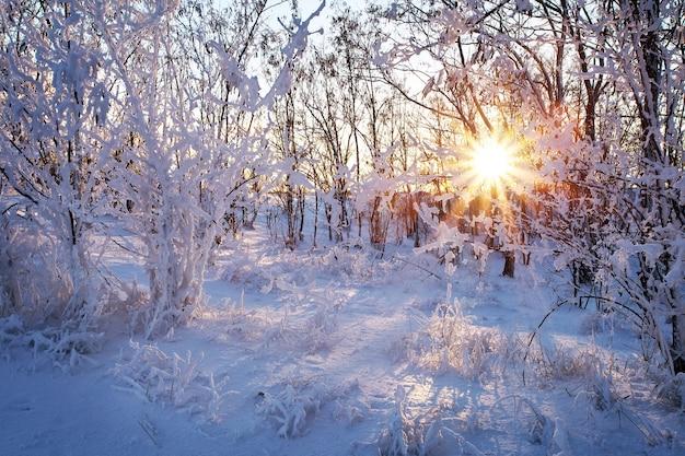 Prachtig winterlandschap bij zonsondergang (zonsopgang) met bomen in sneeuw en zon schijnen door takken