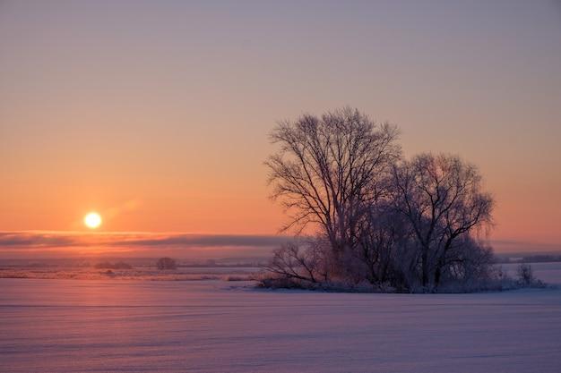 Prachtig winterlandschap en uitzicht op de opkomende zon en bomen in het veld
