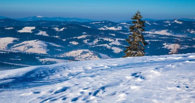Prachtig winterpanorama van de heuvels met een dikke laag sneeuw van wazige bergen en een eenzame dennenboom op een zonnige ijzige winterdag. winter toerisme concept