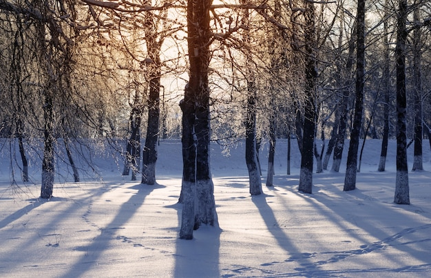 Prachtig winterpark bij sunser