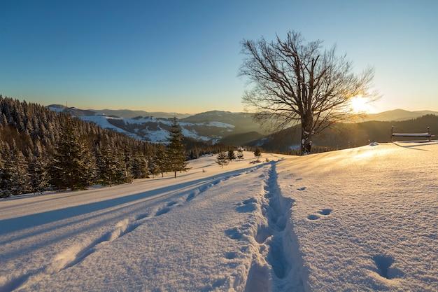 Prachtig winters kerstlandschap. menselijke voetafdruk track pad in kristal witte diepe sneeuw in leeg veld, vuren bomen bos, heuvels en bergen aan de horizon op heldere blauwe hemel kopie ruimte achtergrond.