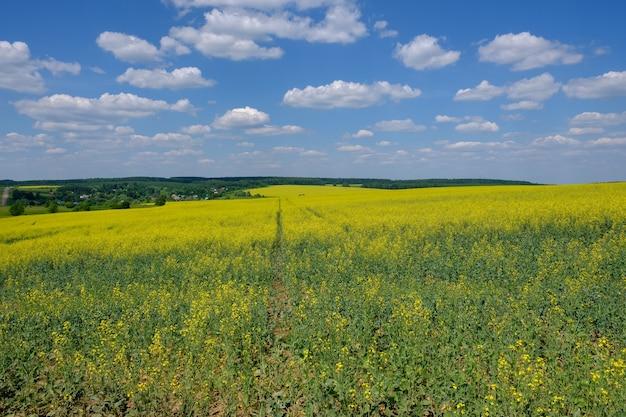 Prachtig zomers landschap met uitzicht op het gele veld van koolzaad, blauwe lucht en witte wolken