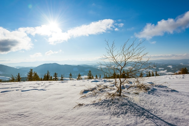 Prachtig zonnig besneeuwd landschap met een droge boom