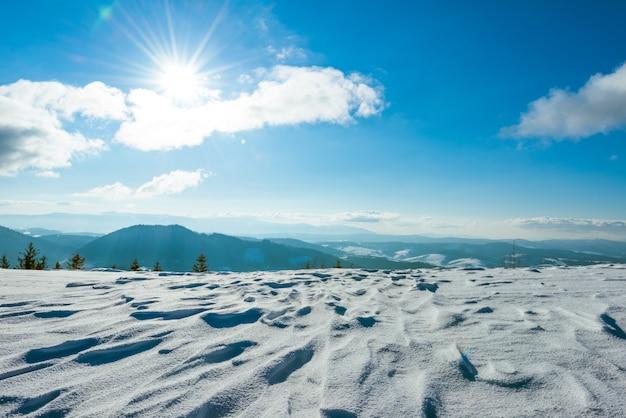 Prachtig zonnig landschap van pluizige sparren die tussen witte sneeuwbanken groeien