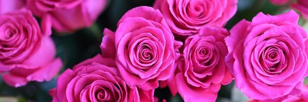 Prachtige abstracte ontwerpsjabloon met roze rozen boeket achtergrond