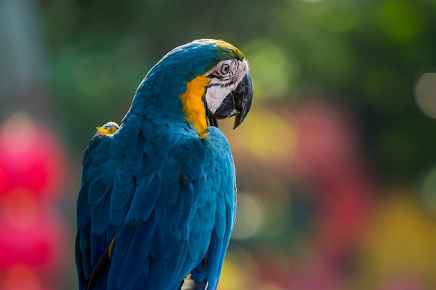 Prachtige ara papegaaien clsoe omhoog