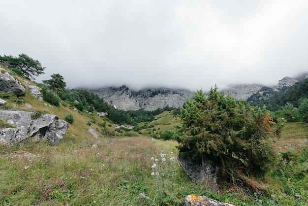 Prachtige bergen en dieren in het wild om hen heen op een zonnige dag.
