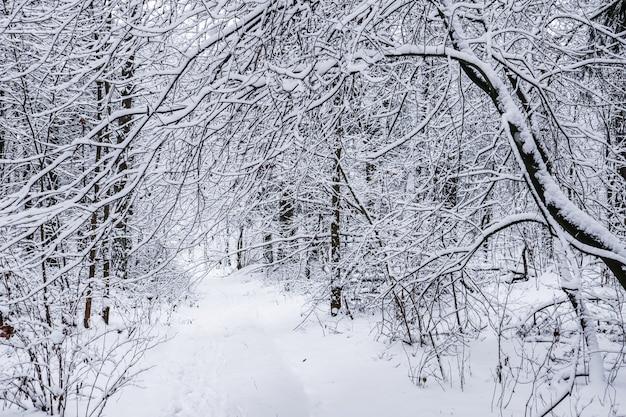 Prachtige besneeuwde winterbos sneeuwwitte weg met een skipiste besneeuwde bomen en struiken