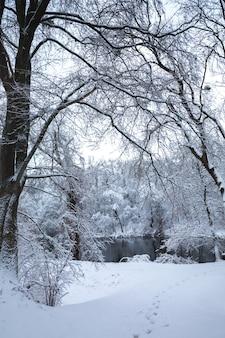 Prachtige besneeuwde winterlandschap in het park