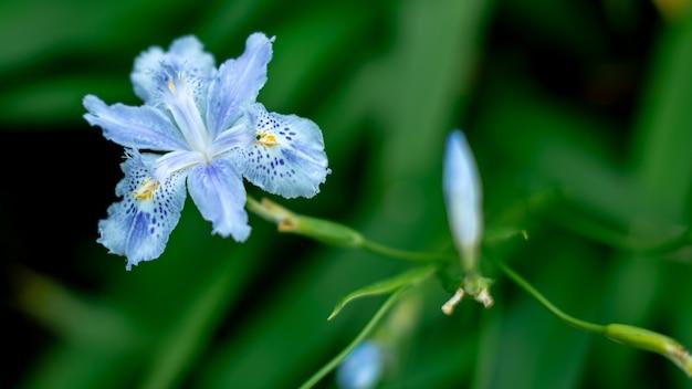 Prachtige blauwe vlinder bloem met wazig groene muur