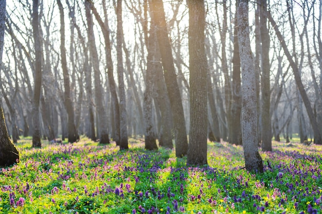 Prachtige boslandschappen. lentebloemen in het bos.