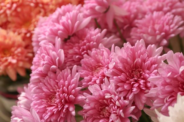 Prachtige chrysantenbloemen