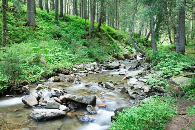 Prachtige diepe boswaterval