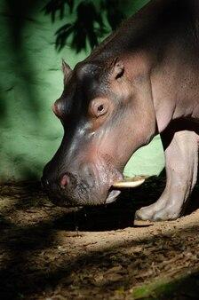 Prachtige dieren gefotografeerd in een dierentuin in brazilië met natuurlijk licht.