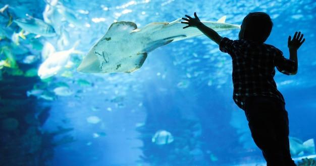 Prachtige en mooie onderwaterwereld met koralen en tropische vissen.