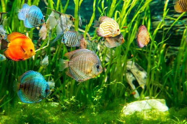 Prachtige en mooie onderwaterwereld met tropische vissen.