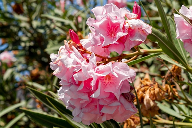 Prachtige exotische roze bloemen