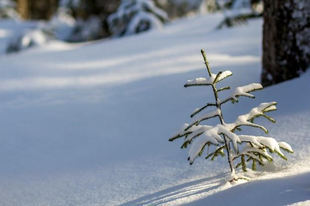 Prachtige geweldige kerst winter berglandschap. kleine jonge groene sparren bedekt met sneeuw en vorst op koude zonnige dag op heldere witte sneeuw en wazige boomstammen kopiëren ruimteachtergrond.