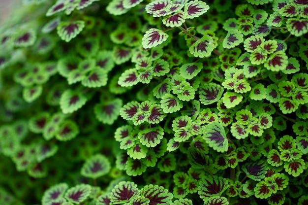 Prachtige groene bladeren close-up