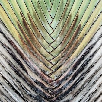 Prachtige groene exotische bananenboom. natuurlijk en patroon
