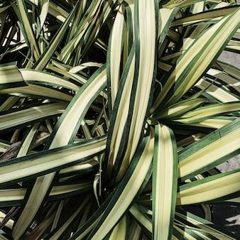 Prachtige groene exotische palmbomen. natuurlijk en patroon