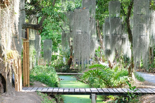 Prachtige groene natuur met tropische plantenbomen en kleine brug