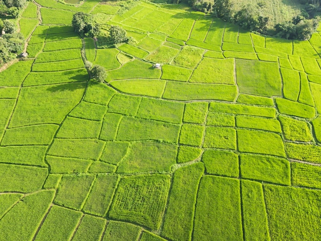 Prachtige groene rijstvelden van drones
