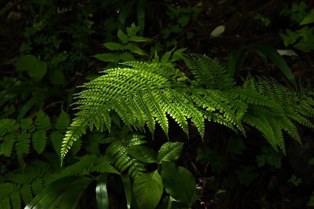 Prachtige groene varenbladeren in de natuur verlicht door een zacht zonlicht.