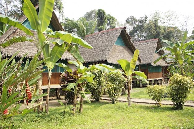 Prachtige hutten in de jungle van puerto maldonado. peru