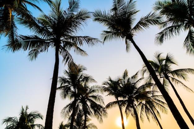 Prachtige kokospalm met zonsondergang