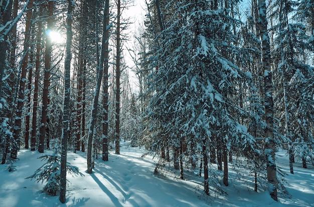 Prachtige landelijke winterlandschap met bos zon en sneeuw.