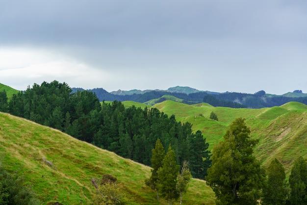 Prachtige landschap van bergen langs de weg op whanganui rivierweg in nationaal park in de herfst, whanganui, noordereiland van nieuw-zeeland