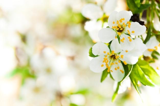 Prachtige lente bokeh voor ontwerp met copyspace