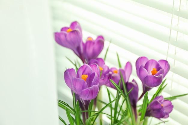 Prachtige lente crocus tegen lichte achtergrond, ruimte voor tekst