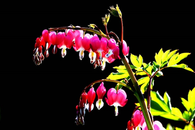 Prachtige lentebloemen in het gras
