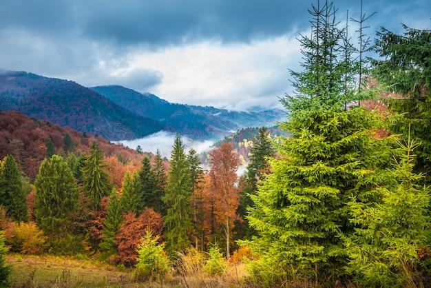 Prachtige majestueuze landschap met naaldbomen op berg.