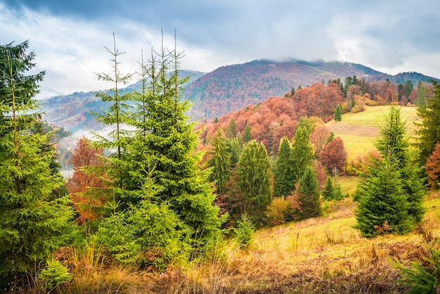 Prachtige mistige heuvel met kleurrijke kerstbomen