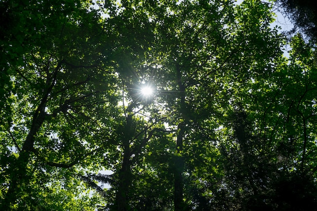Prachtige natuur in de ochtend in het mistige lentebos met zonnestralen